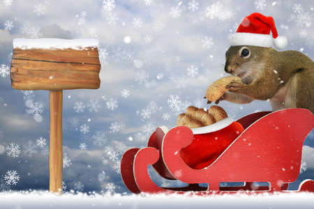 Red squirrel wearing a santa hat eatting a peanut in a red sleigh in the snow