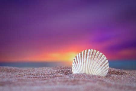 Scallop shell in the ocean sand under a beautiful sunset Standard-Bild - 110300687