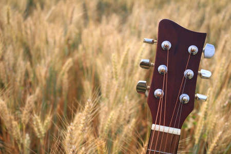 Close up of an acoustic guitar.tuning keys in a wheat field Standard-Bild - 112617121
