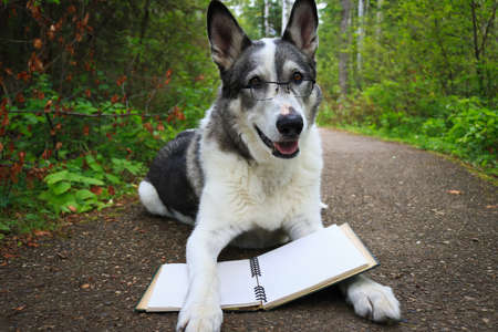 Malamute dog wearing glasses reading in the park Standard-Bild - 117299678