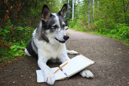 Malamute dog wearing glasses reading in the park