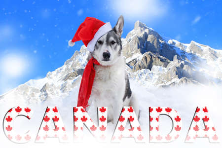 Malamute dog sitting in the snow in front of mountains in Banff, Alberta wearing a santa hat and scarf Фото со стока