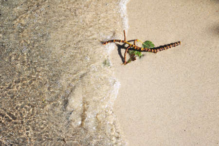 Abstract scene of a wet twig on beach sand on a lake shore