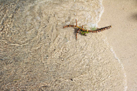 Abstract scene of a wet twig on beach sand on a lake shore Standard-Bild - 117300049