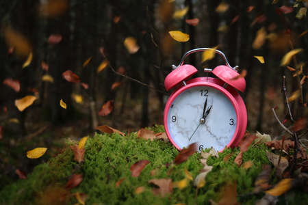 Autumn leaves blowing in the wind across a pink alarm clock on green moss in the forest