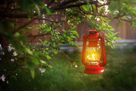 Evening scence of a lt hanging lantern in a tree branch Standard-Bild - 117300163