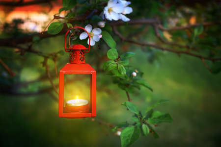 Evening scence of a hanging lantern in a tree branch Stok Fotoğraf