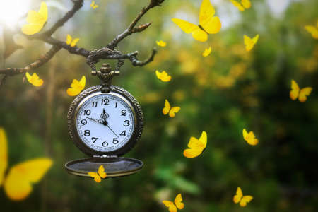Yellow butterflies flying around an antique pocket watch hanging from a tree branch Standard-Bild - 117300173