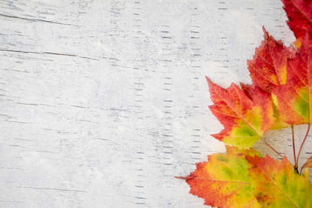 Colorful autumn leaves on a white wood background