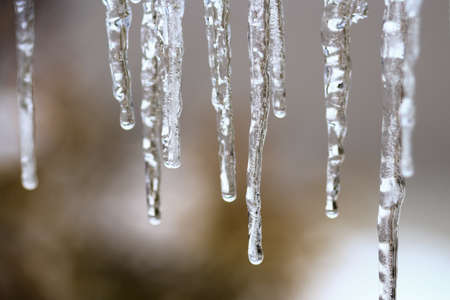 Hanging icicles melting in the sunshine