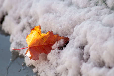 Autumn leaf on the frosted snow of a car window