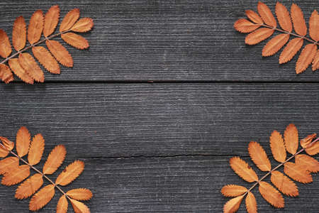 Colorful orange autumn leaves captured from above top view, flat lay. Rustic wooden background