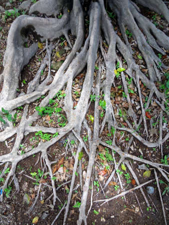profound: Profound tree roots branch off across the surface