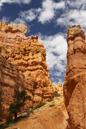 hoodoos: hoodoos in Bryce Canyon