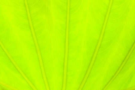 green life: light green leaf abstract nature background, blooming light blurred