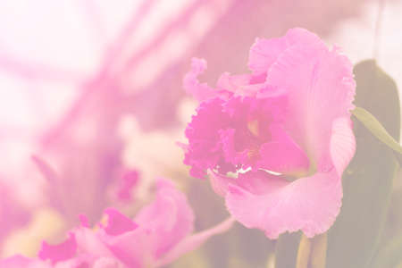 orchidea: purple orchid, sweet bright toned