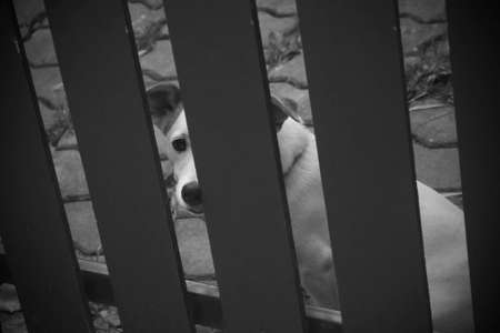 caged: Lonely dog is caged in a house, black and white toned with grain Stock Photo