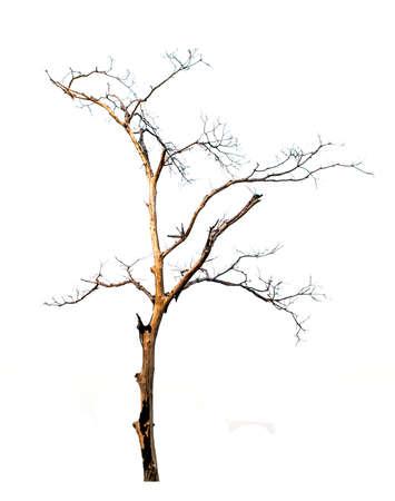 leafless: burned leafless tree on white background Stock Photo