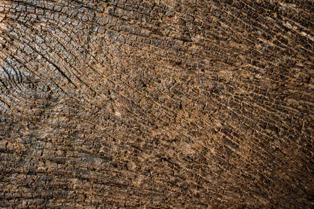 grunge wooden texture background, abstract dark