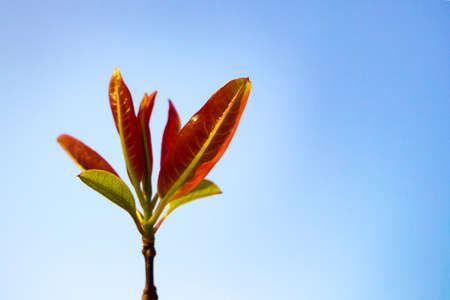 young red leaf on sky background, soft focused, copy space Stock Photo