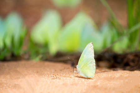 yellow butterfly on nature background, soft focused Stock Photo