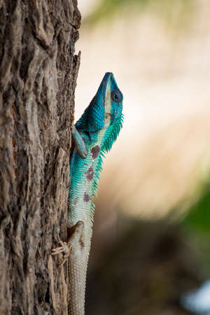green lizard on a tree, soft focused