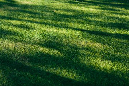 field of fresh green grass texture as a background,