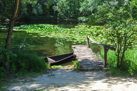 The shore of a summer pond in a village with wooden walkways and a boat, the water is overgrown with lilies, picturesque nature with an abundance of greenery.