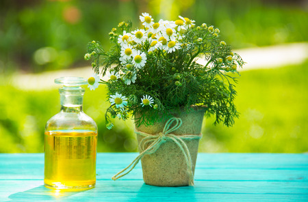 peat pot: Chamomile essential oil in a glass bottle. A daisy flower in a peat pot. Spa concept. Natural cosmetics.