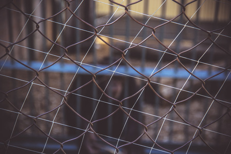 Metal mesh rabitz background. Blurred background, primates in a cage. Zoo. Stock Photo
