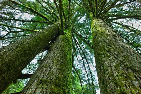 The three tree 版權商用圖片