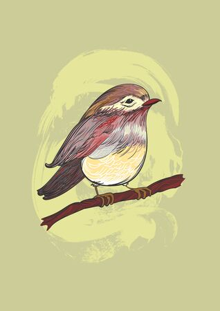 Color engraving sketch of a tit bird on a tree branch with grunge effects. 向量圖像