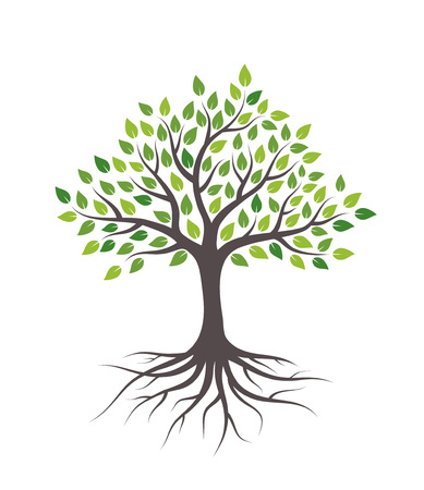 녹색 잎과 뿌리를 가진 나무입니다. 흰색 배경에 고립.