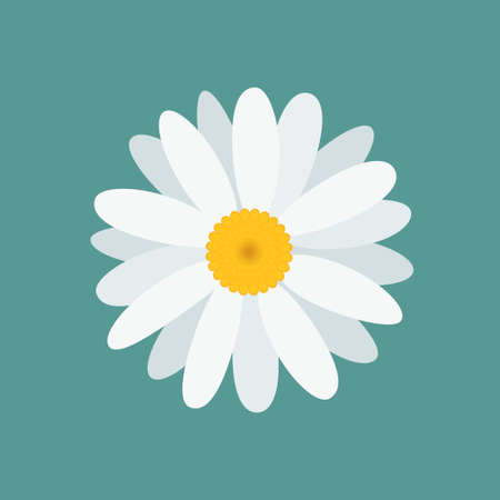 White beautiful chamomile flower, isolated on blue background. Top view. Vector Illustration. Ilustracja