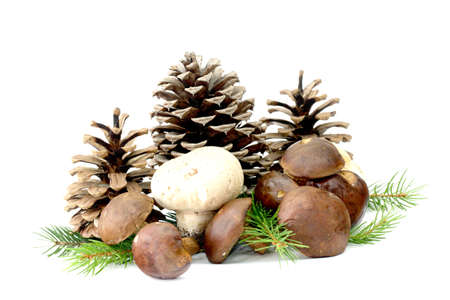 Mushrooms and conifers on white background Stock Photo