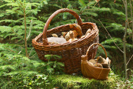 Muschrooms baskets in the forest