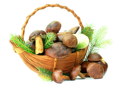 흰색 배경에 버섯 바구니