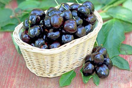 Fresh black cherries basket
