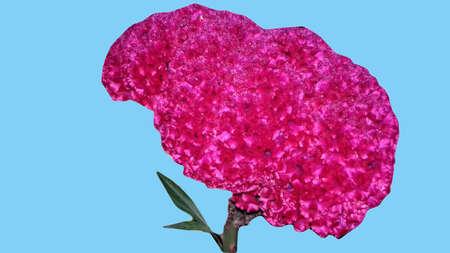 merah: Plume Flower Stock Photo
