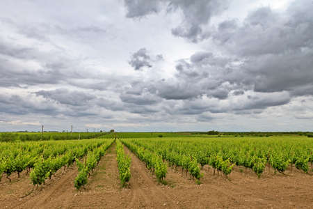 cloudscape and vineyard Stock Photo - 14055861