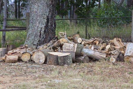 woodpile: Woodpile under oak tree Stock Photo