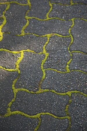 Green moss in between paving stones