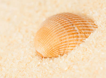 seashell on the sand on a blurred background, close-up