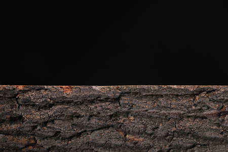Sawn along a tree log with bark on a black background