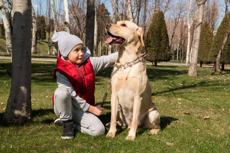 little boy playing with dog labrador in spring park