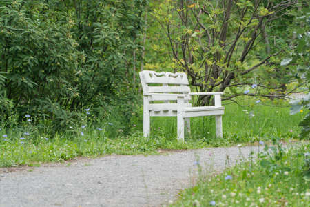 white wooden bench in the Park by the path
