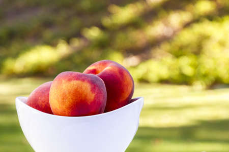 Delicious peaches in a bowl in a greenery backdrop and setting sunlight