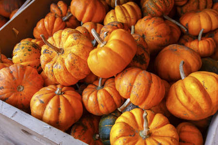 recently: A wood crate with recently harvested pumpkins at a local ranch