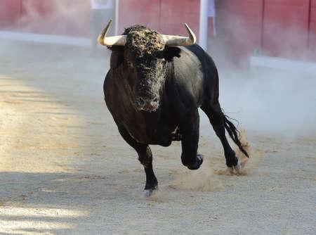 Angry bull in spain Reklamní fotografie