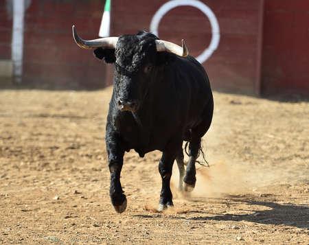 Black bull in spain